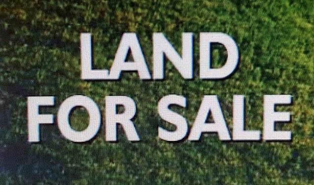 000 Wilson Dam Rd, Muscle Shoals, AL 35661 (MLS #155281) :: MarMac Real Estate