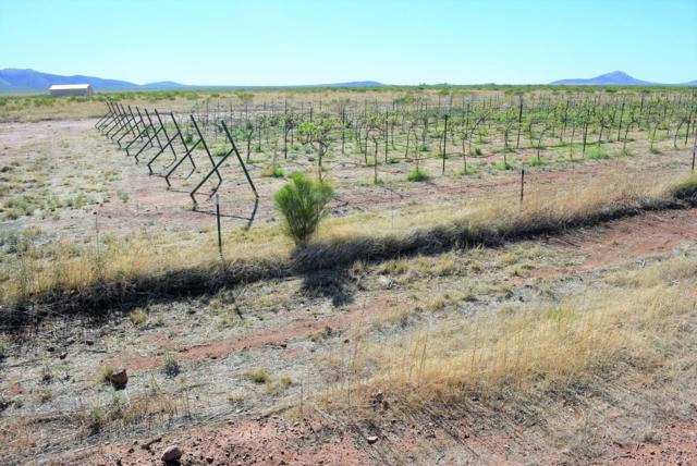 Address Not Published, Mcneal, AZ 85617 (MLS #167801) :: Service First Realty