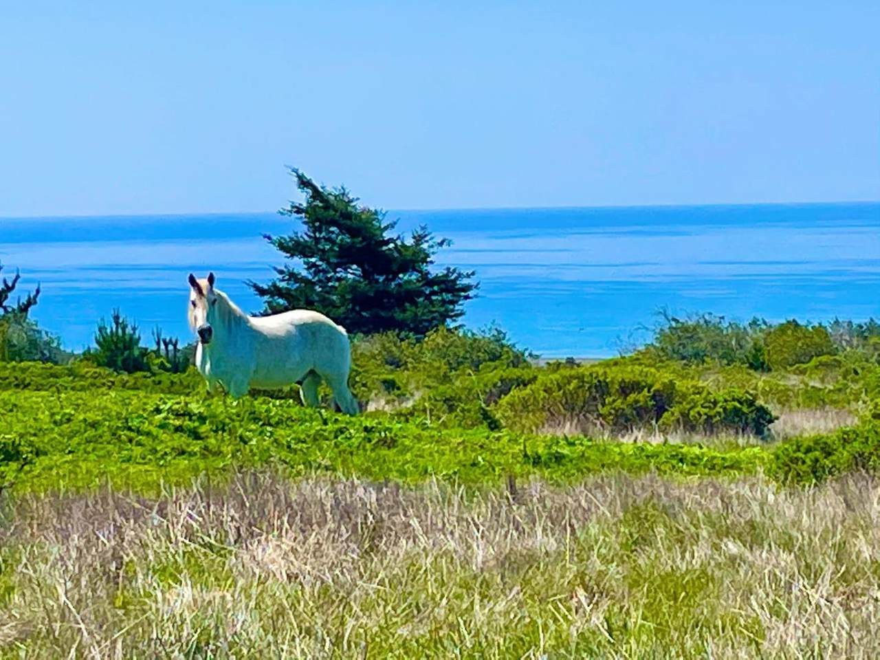 000 Pigeon Point Rd - Photo 1