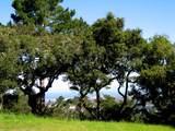 7870 Monterra Oaks - Photo 8