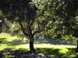 0 Monterra Ranch (Lot 1) - Photo 6