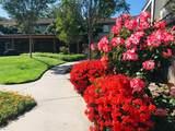 3597 Bascom Ave 45 - Photo 2