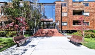 2352 La Terrace Cir, San Jose, CA 95123 (#ML81643700) :: The Goss Real Estate Group, Keller Williams Bay Area Estates