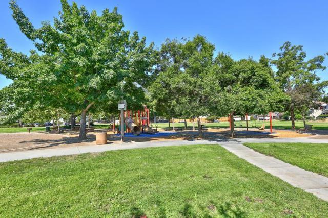 5274 Chynoweth Park Ct, San Jose, CA 95136 (#ML81715524) :: The Warfel Gardin Group