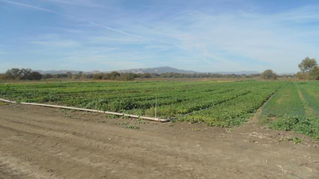 9004 Frazier Lake Rd, Hollister, CA 95023 (#ML81732602) :: The Gilmartin Group
