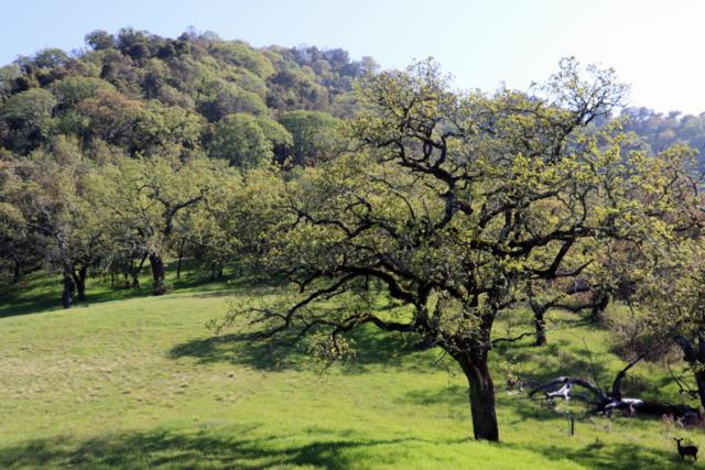 22 Arroyo Sequoia, Carmel Valley, CA 93923 (#ML81754984) :: Strock Real Estate