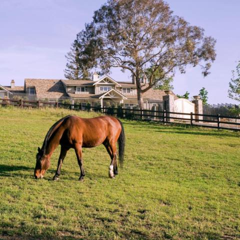 22490 Eden Valley Ct, Saratoga, CA 95070 (#ML81757974) :: Strock Real Estate