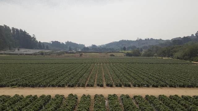 215 Spring View Rd, La Selva Beach, CA 95076 (#ML81809377) :: The Sean Cooper Real Estate Group