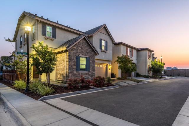 290 Calypso Ct, Milpitas, CA 95035 (#ML81682162) :: The Goss Real Estate Group, Keller Williams Bay Area Estates