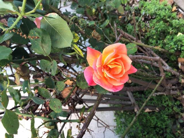840 California St, Salinas, CA 93901 (#ML81791122) :: Robert Balina | Synergize Realty