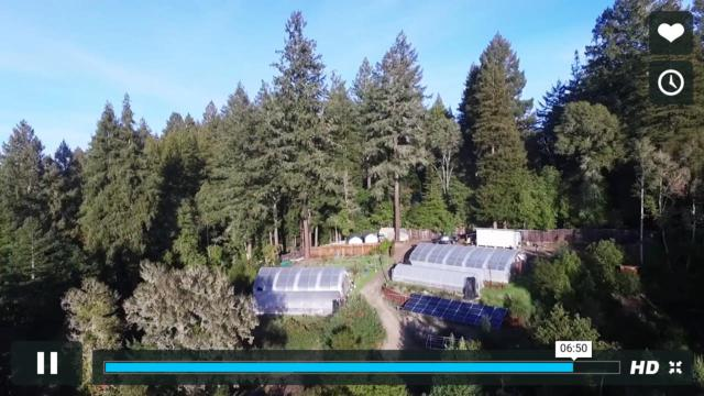 795 Redwood Rd, Felton, CA 95018 (#ML81689435) :: Brett Jennings Real Estate Experts