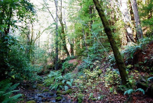 0 Deer Creek, Boulder Creek, CA 95006 (#ML81725291) :: Brett Jennings Real Estate Experts