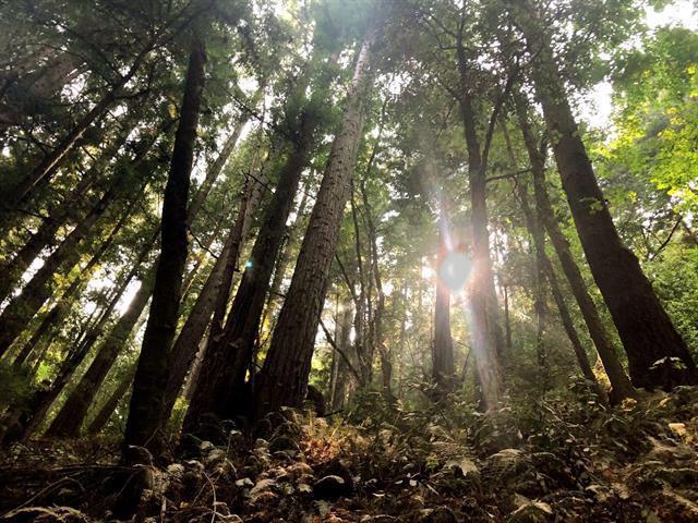 0 Love Creek Rd., Ben Lomond, CA 95005 (#ML81732659) :: The Warfel Gardin Group