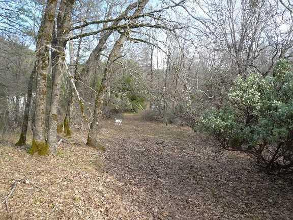 000 Cordes Ct, Lakehead, CA 96051 (#ML81733567) :: Strock Real Estate