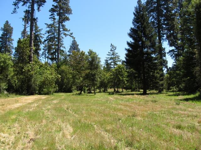 0 Woodpecker Ridge Rd, Santa Cruz, CA 95060 (#ML81652694) :: Strock Real Estate