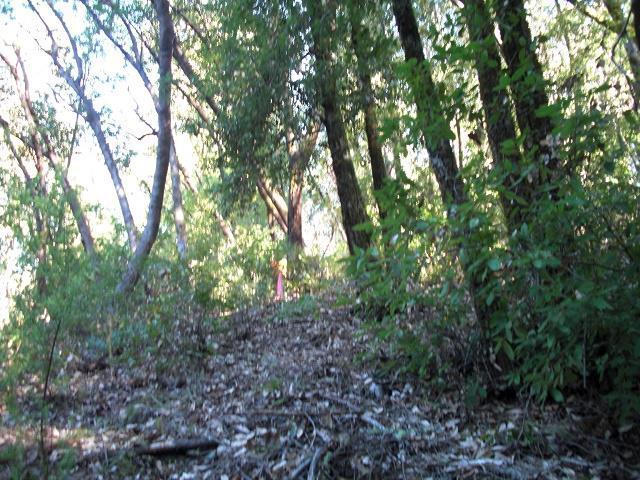 0 Fritch Creek Rd, Ben Lomond, CA 95005 (#ML81684323) :: The Kulda Real Estate Group