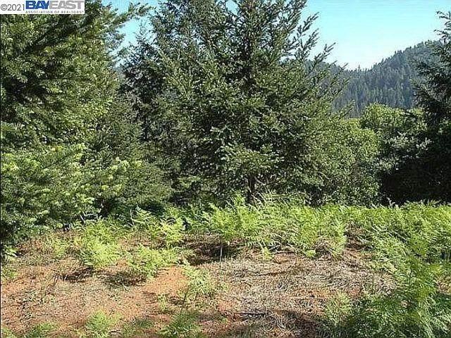 0 Lagunitas Rd, LAGUNITAS, CA 94938 (#BE40957812) :: Schneider Estates