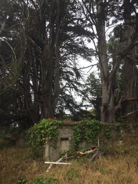 Edgemar St, Daly City, CA 94014 (#ML81714548) :: Brett Jennings Real Estate Experts