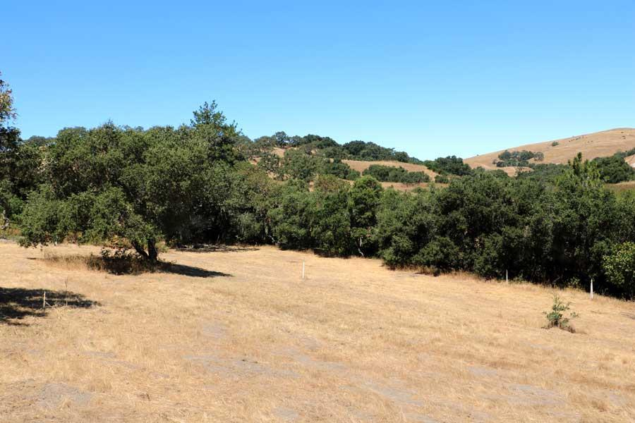 3 Ohlone Trce - Photo 1