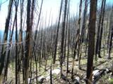TBD Spring Creek Road - Photo 4