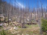 TBD Spring Creek Road - Photo 5