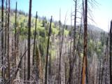 TBD Spring Creek Road - Photo 6