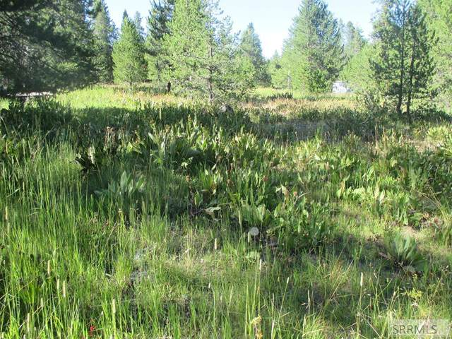 TBD Buffalo Lane, Island Park, ID 83429 (MLS #2131112) :: The Group Real Estate