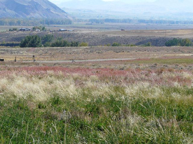 Lot  28 Stephens Gulch, Challis, ID 83226 (MLS #198032) :: The Perfect Home