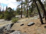 0-2 lots Pine Cone - Photo 1
