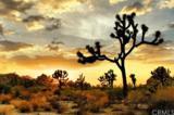 3300 Yucca Mesa Road - Photo 2