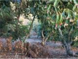 42945 Tierra Linda - Photo 17