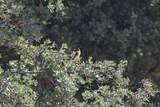 71900 Vineyard Canyon Road - Photo 35