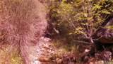 22100 Morgan Valley Road - Photo 1