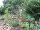 825 Evergreen Ln - Photo 23