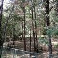 0 Rosewood - Photo 2