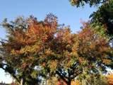 5 Vista Verde Way - Photo 54