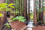 353 Henry Cowell Drive - Photo 25