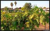 10961 Desert Lawn Dr - Photo 22