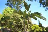 7685 Zayante Road - Photo 53
