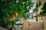 31764 Green Oak Way - Photo 48