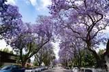 706 Santiago Street - Photo 12