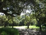 7870 Monterra Oaks - Photo 4