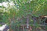 4541 Bedilion Street - Photo 42