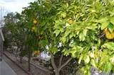 27361 Sierra Hwy - Photo 37