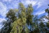 23675 Cypress Place - Photo 59