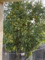 1137 Walnut Glen Court - Photo 21