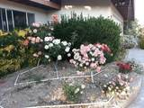 61820 Petunia Drive - Photo 17