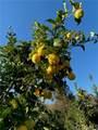 25722 Orchard Rim Ln - Photo 23