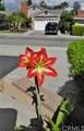 5551 Del Loma Avenue - Photo 67