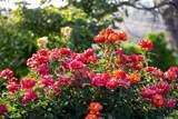 9553 Lilac Walk - Photo 39